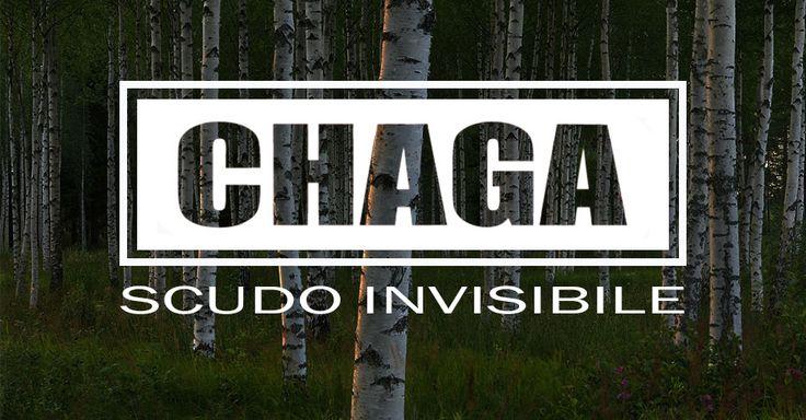 Cos'è Chaga? Chaga, scientificamente chiamato Inonotus Obliquo, cresce sulle betulle negli habitat più freddi dell'emisfero settentrionale. Questo particolare fungo è ricco di sostanze nutritive ed è stato utilizzato per secoli in Russia e in altre parti dell'Europa orientale come erba medicinale. L'elevato valore nutritivo di Chaga ha