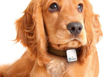gps tracker for dogs