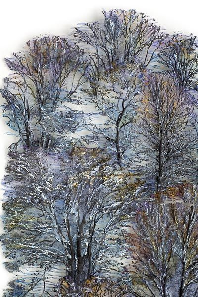 Winter Forest by Lesley Richmond