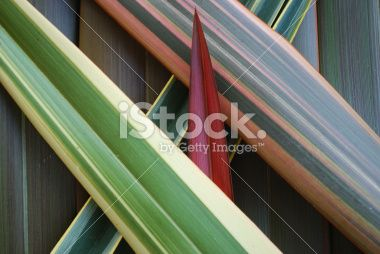 Phormium Background Royalty Free Stock Photo