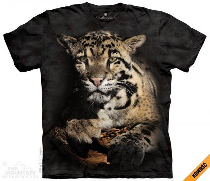 Clouded Leopard - The Mountain - koszulka z leopardem - sklep internetowy www.veoveo.pl