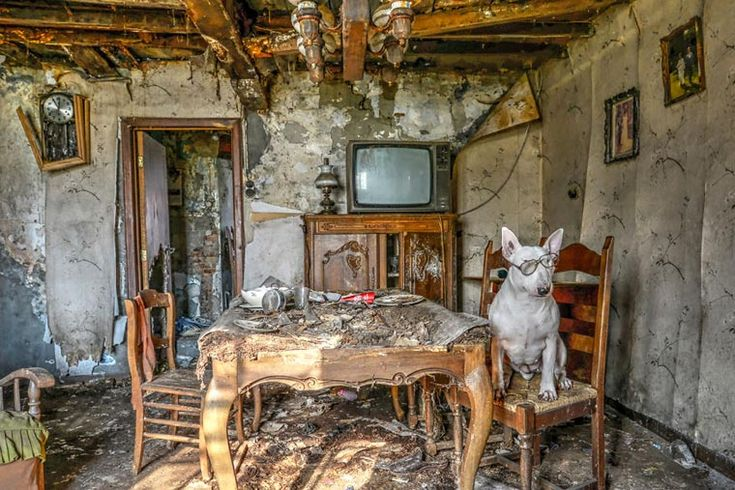 Urbex Dog – Une photographe explore les lieux abandonnés avec son chien (image)