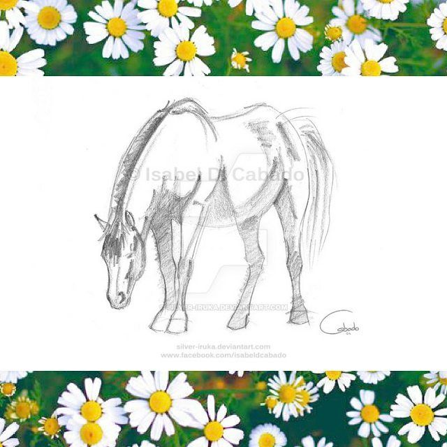 Horse sketch by Isabel D. Cabado.  Horse with his head down, maybe it noticed something curious on the floor.