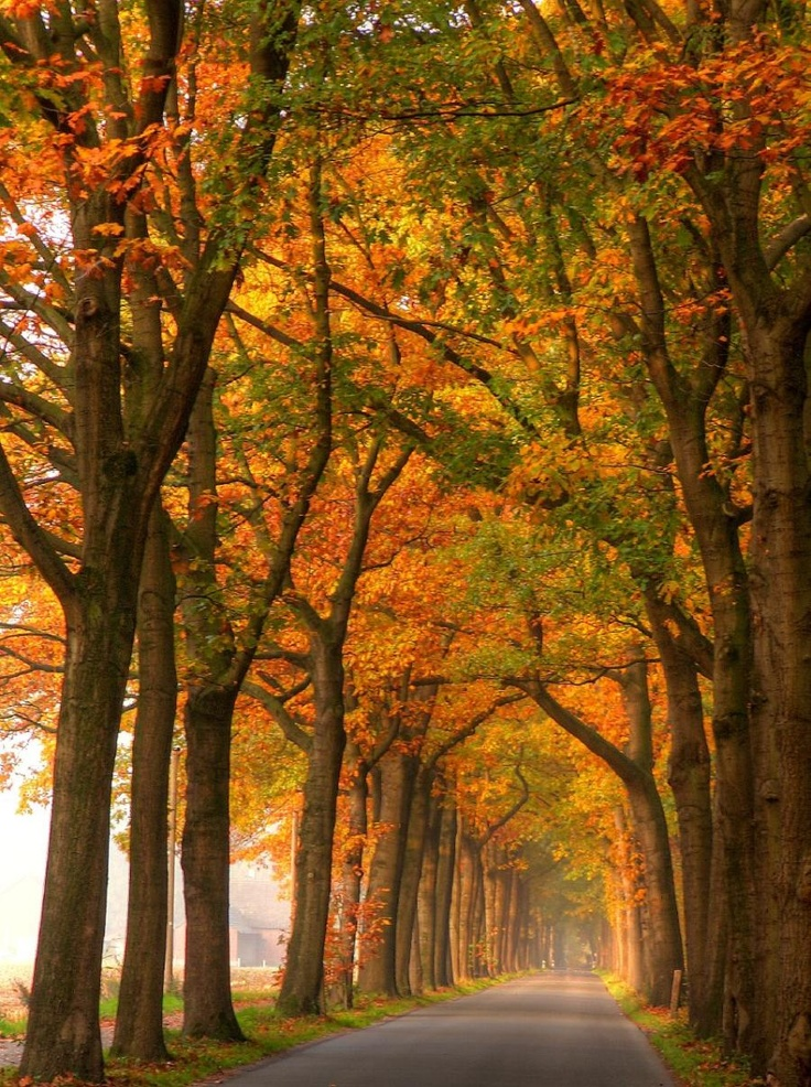Beautiful Autumn Sunset: 17 Best Images About Country Roads On Pinterest