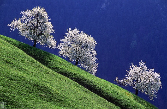 Reconnect with nature.  Photo of Cherry Blossoms in the Morning by Gregor Halbwedl - Austria