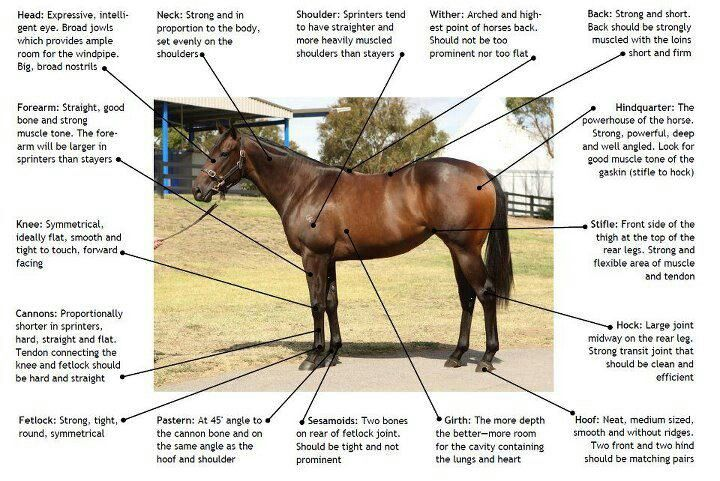 how to look at thoroughbred