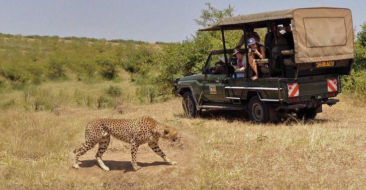 Safari holidays are an amazing travel experience. Come and enjoy #KenyaSafariHolidays. Know more @ https://goo.gl/ZWH9xZ