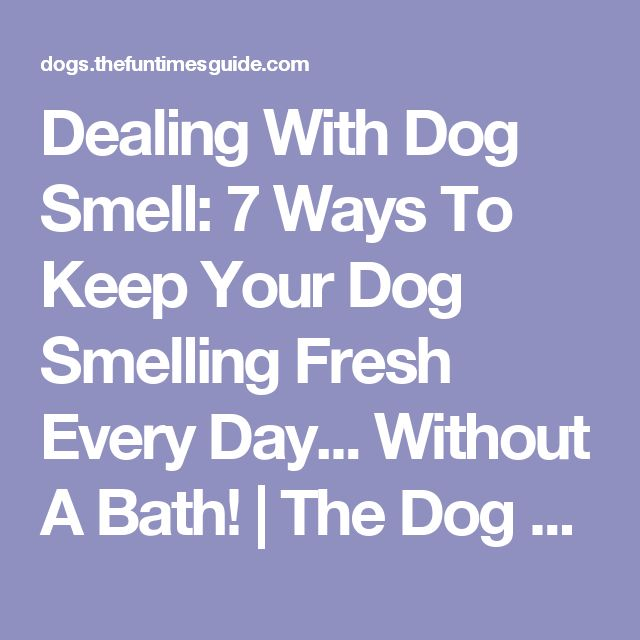 Dealing With Dog Smell: 7 Ways To Keep Your Dog Smelling Fresh Every Day... Without A Bath! | The Dog Guide