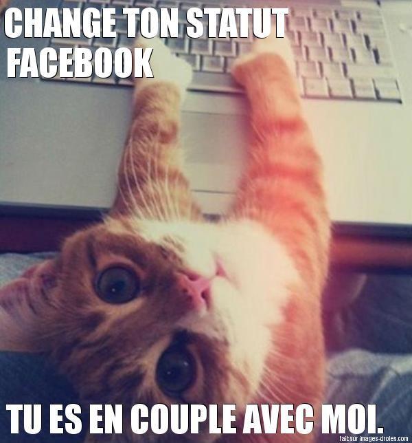 Chat jaloux                                                                                                                                                                                 Plus