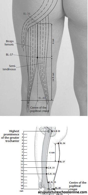 Anatomía región posterior del muslo. Clínica de Artrosis y ...