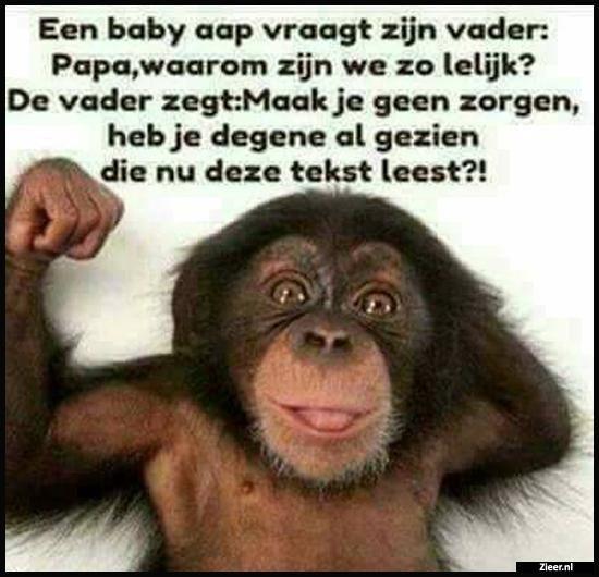 Een baby aap