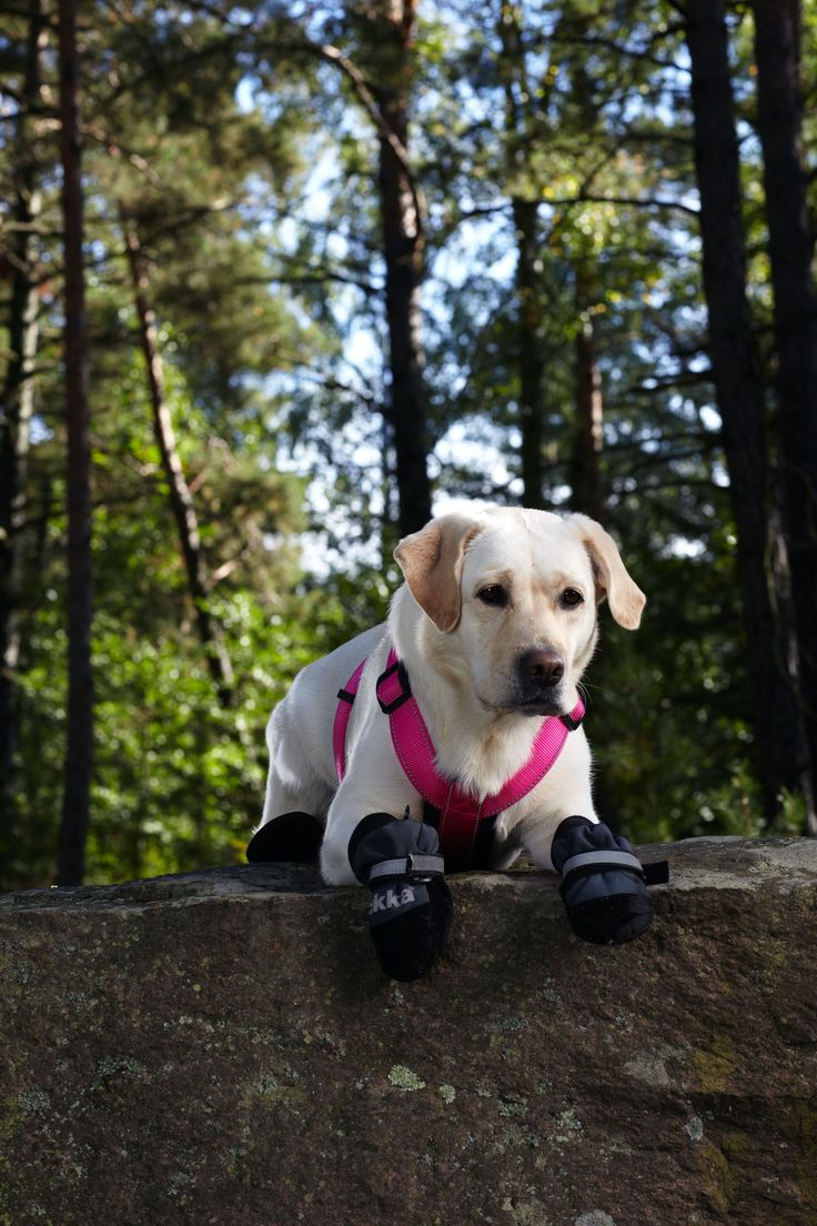 Form harness and shoes - Spring / Summer 2017 by Rukka Pets