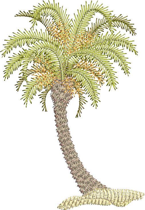 Morocco Palm A