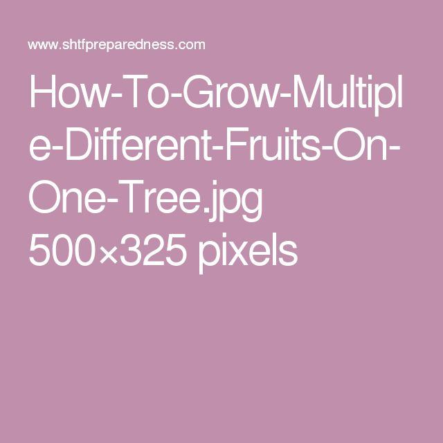 How-To-Grow-Multiple-Different-Fruits-On-One-Tree.jpg 500×325 pixels