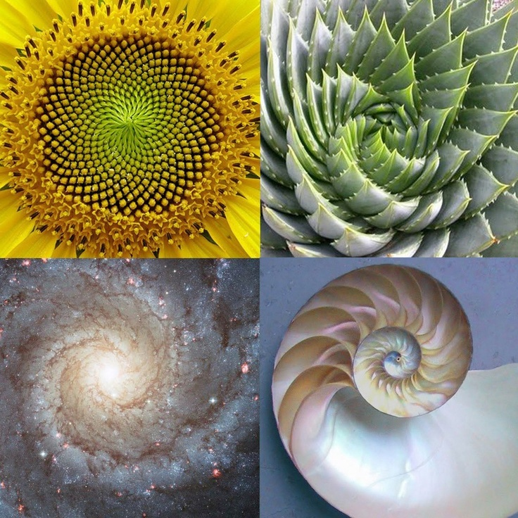The Fibonacci sequence is 1, 1, 2, 3, 5, 8, 13, 21, 34, 55, 89, 144 etc. Each number is the sum of the previous two numbers, and it continues on to infinity. The ratio between these numbers approximates 1.618034, the golden ratio.