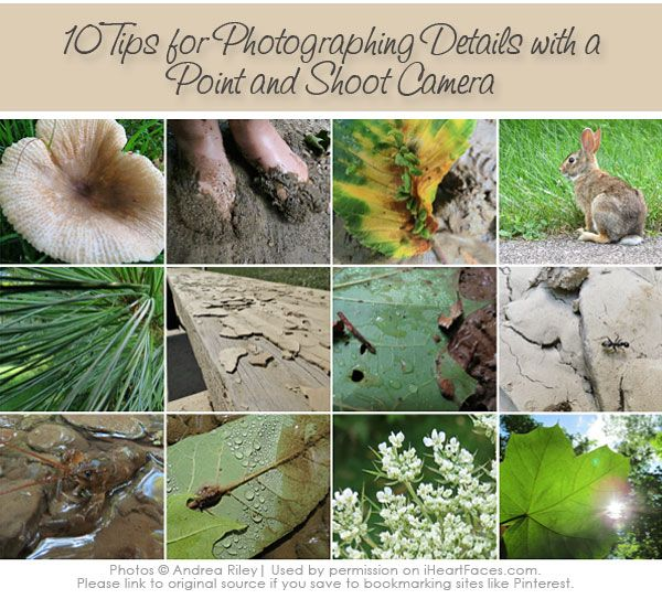 10 Tips for Photographing Details with a Point and Shoot Camera | iHeartFaces.com