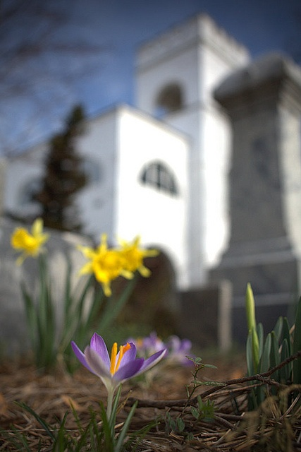An Early Spring: Photo