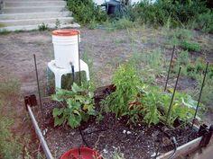 Planten automatisch water geven met een systeem op de zwaartekracht. #irrigatie