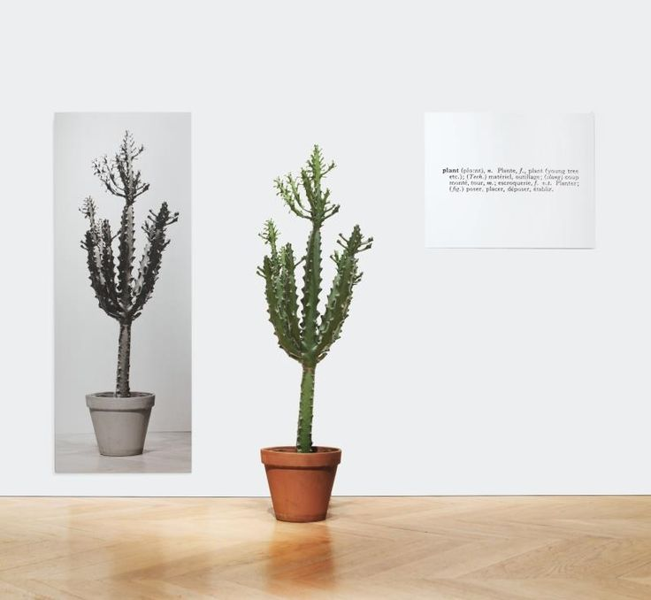 Artwork by Joseph Kosuth, ONE AND THREE PLANTS, Made of plant and black and