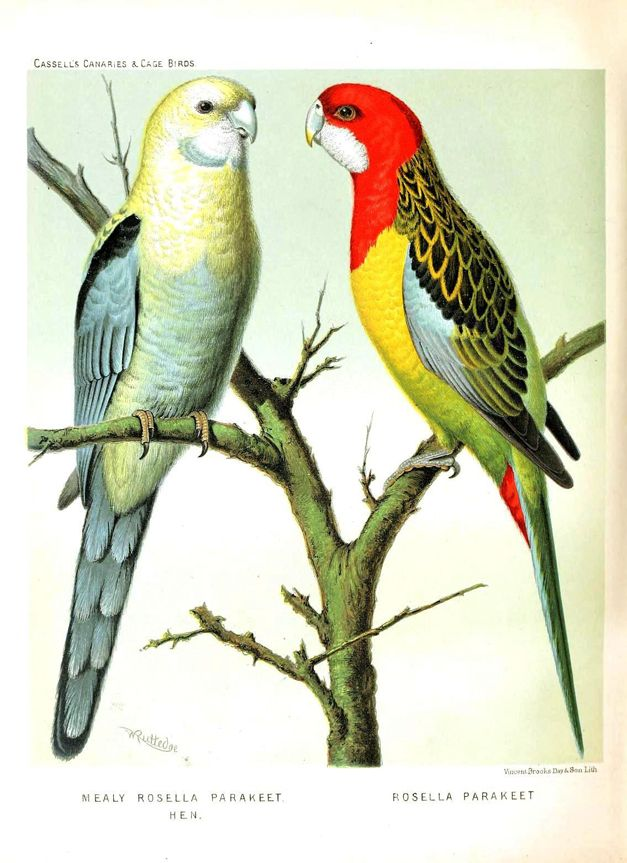13 best images about Vintage Birds on Pinterest | Antiques ...