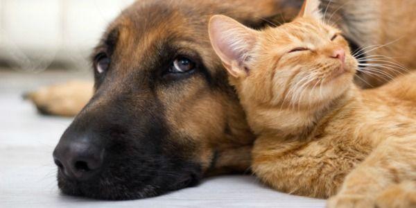 New York: Vyžadovať všetci psi a mačky predávané v obchodoch maznáčika prísť z útulkov