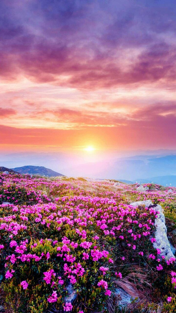 Nature Sun Relaxation Sky Flowers Roses Blue Pink Green Love Air Breath Beautiful Nature Beautiful Landscapes Flowers Nature