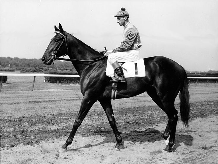 Secretariat's Daddy--Bold Ruler and Eddie Arcaro. Arcaro (February 19, 1916–November 14, 1997), was an American Thoroughbred horse racing Hall of Fame jockey who won more American classic races than any other jockey in history and is the only rider to have won the U.S. Triple Crown twice.