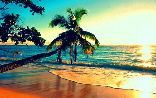 beaches: Bucket List, Beaches, Favorite Places, Beautiful, Palm Trees, Summer, Travel, Paradise, Island