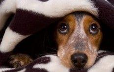 Mis niet de uitdrukking van deze honden die op heterdaad betrapt worden