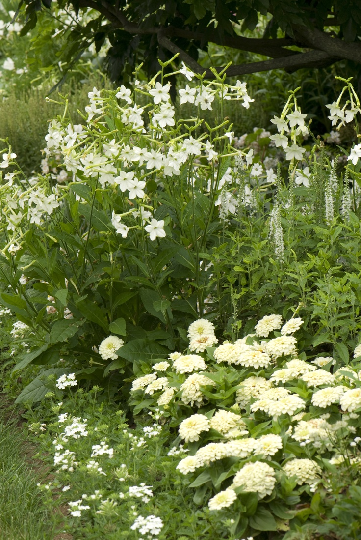 best Garden images on Pinterest Landscaping White gardens and