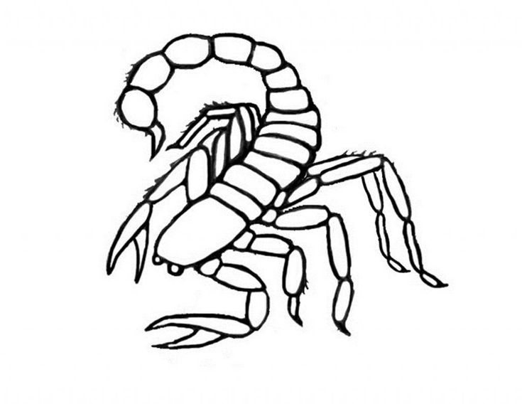 Simple Free Printable Scorpion Coloring Pages For Kids For Boys