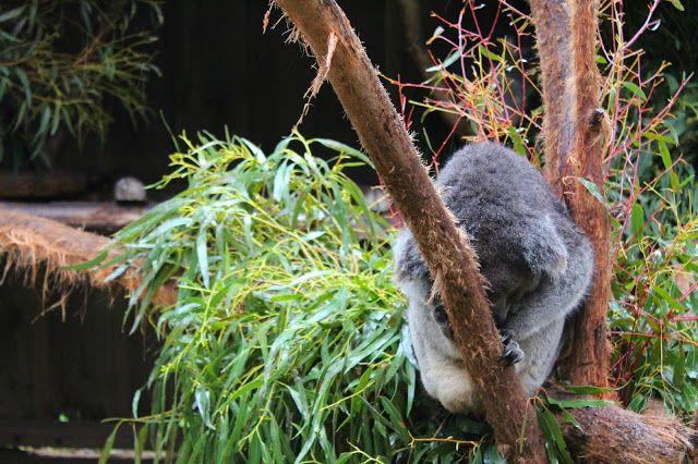 The Ballarat Wildlife Park