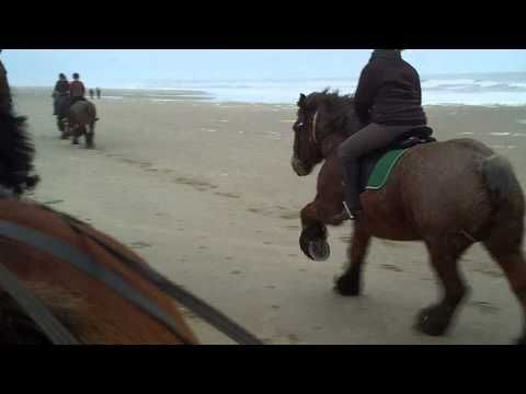 Belgian horses on the beach... must be a lot of fun!