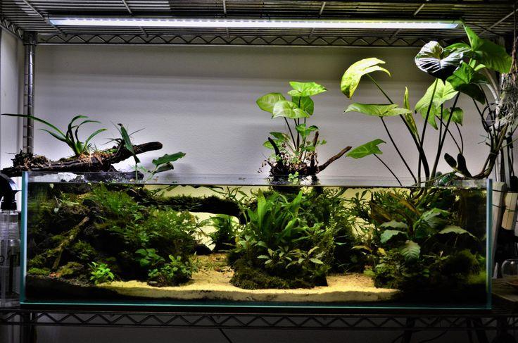 Shallow Aquarium update continued