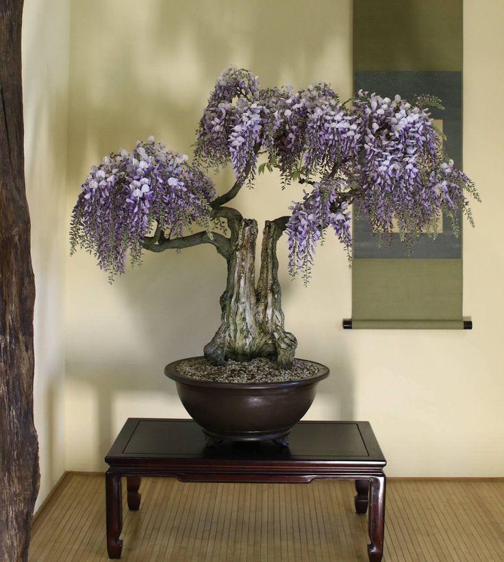 Wisteria by Peter Ebensperger. #bonsai | Great Bonsai ...