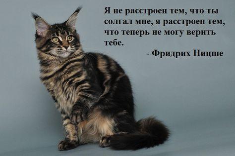 Письмо «Популярные Пины на тему «цитаты»» — Pinterest — Яндекс.Почта