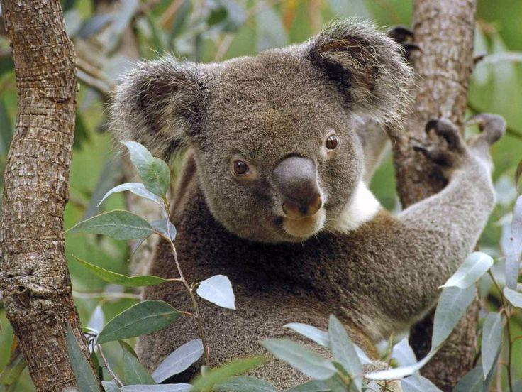 Para el año 2050 una cuarta parte de las especies de la tierra estará en peligro de extinción, los siguientes animales ya se encuentran en riesgo.