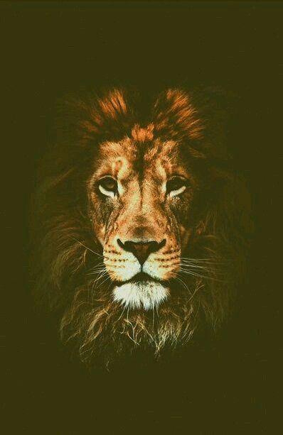 Leão Wallpapers