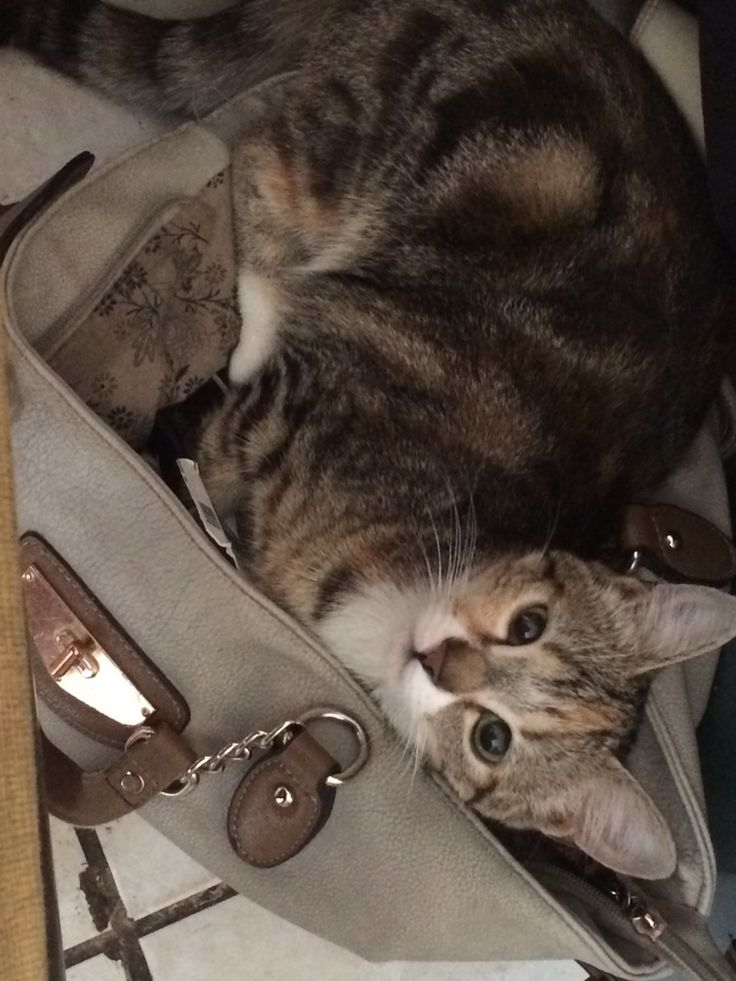 In her handbag. Now she have to take me with her....