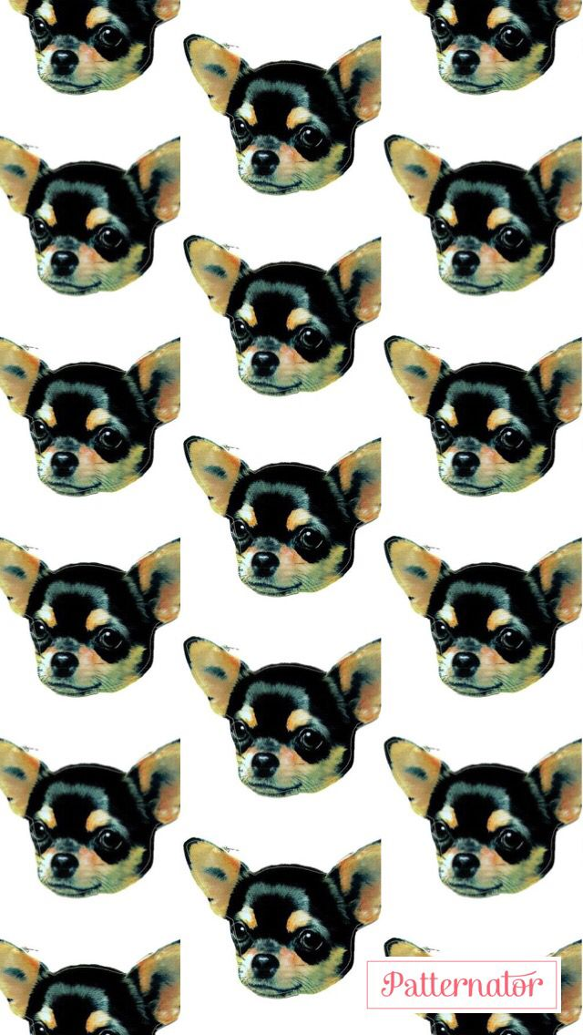 Iphone 5s Wallpaper #chihuahua #doglover