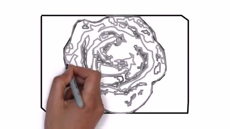 how to draw a wonderful rose