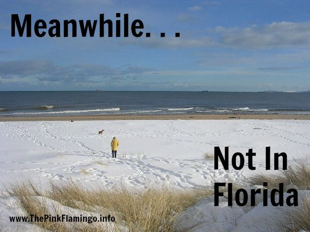 26 Best Not In Florida Images On Pinterest Flamingos Pink Flamingos And Swans