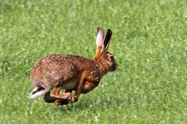 dieren in beweging - Google zoeken