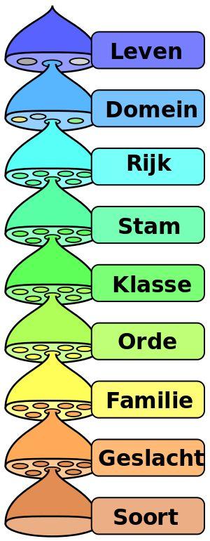 Verschillende niveaus van het wetenschappelijk classificatiesysteem.