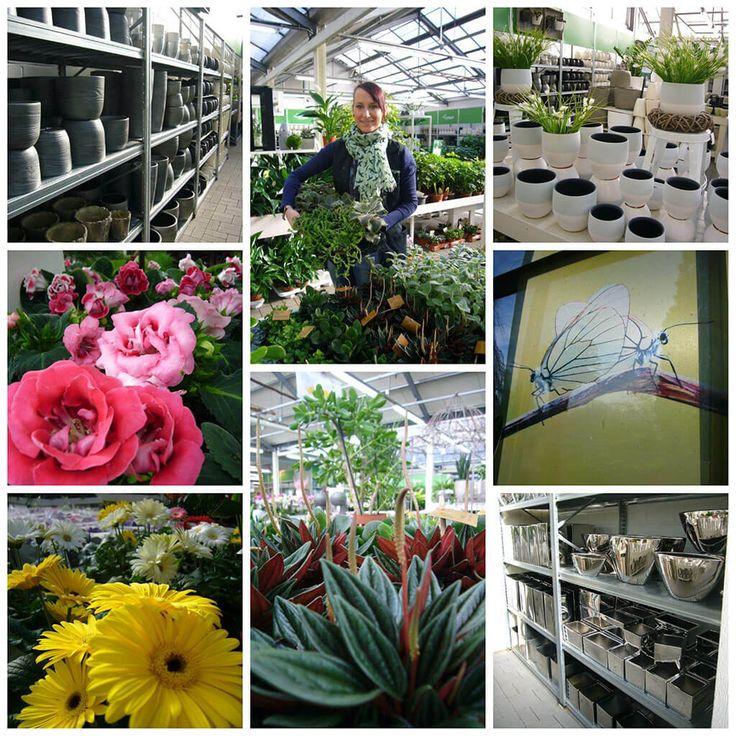 17 Best Ideas About Blühende Zimmerpflanzen On Pinterest ... Auswahl Balkonpflanzen Kombiniert