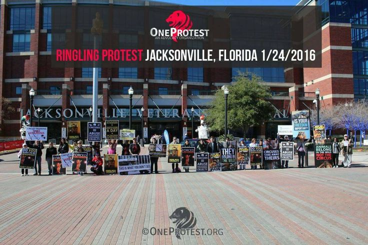 (396) Twitter OneProtest @oneprotestinc  Ringling Bros protests start next week! Stand against #circuscruelty. Join us in Jacksonville http://Facebook.com/oneprotest/events …