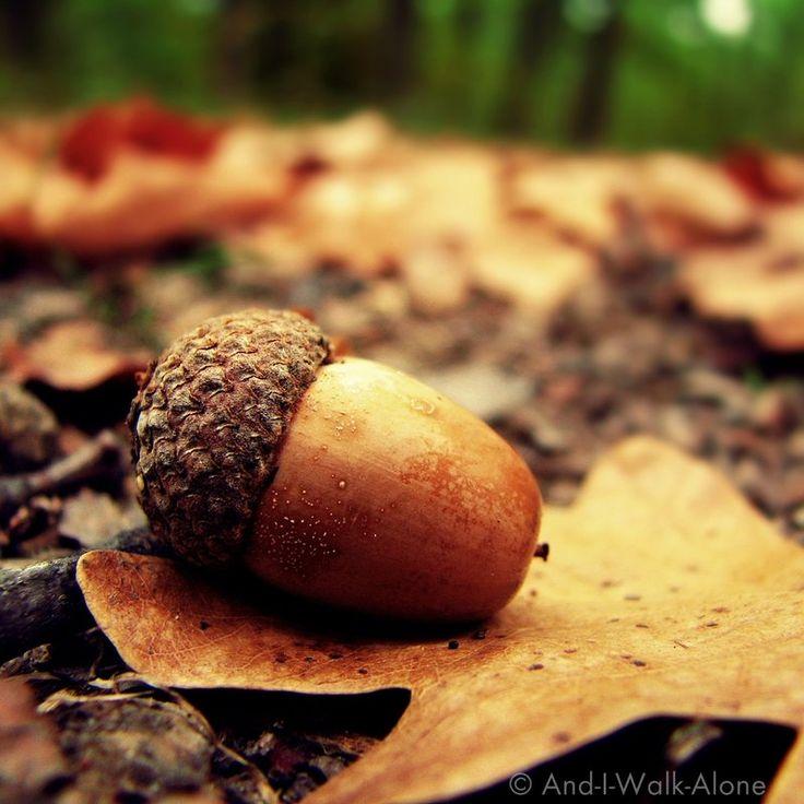 #Autumn: