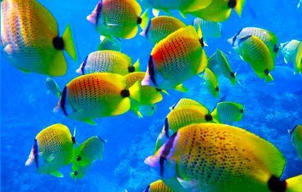 Oahu Hanauma Bay Snorkeling - Oahu Snorkel Tour