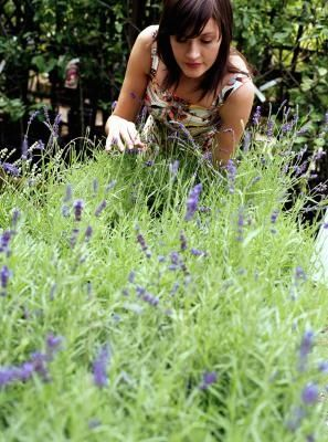 How to Apply Lavender & Peppermint Oils As Insect Repellents