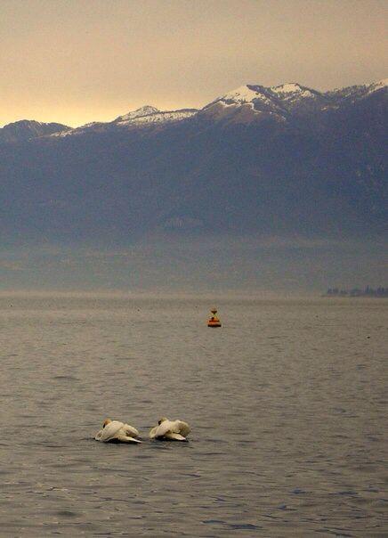 Lago di Garda, Lazise